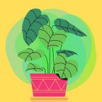 Indoor leafy plant graphic in red pot on bright yellow background